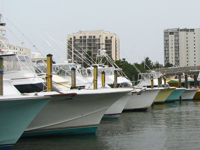 virginia fishing charter boats